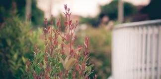 Twój ogród na balkonie – jak go założyć?