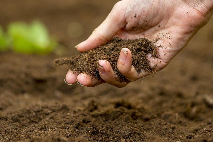 Jak zakwasić ziemię w ogrodzie?
