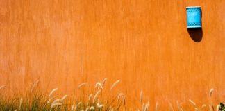 Trawa pampasowa