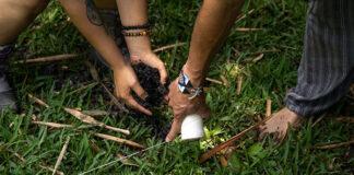 Jak stworzyć ogród w wiejskim stylu