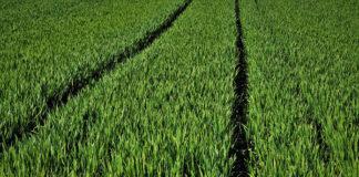 Jak uprzyjemnić i ułatwić sobie uprawę roślin